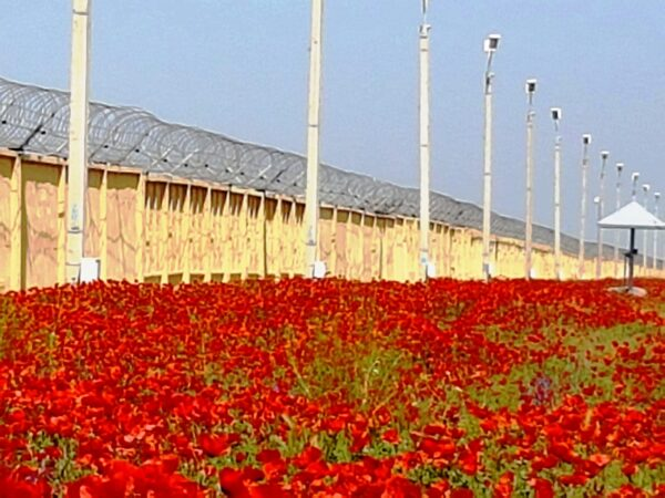 A wall with barbed wire on top with motion detecting sensors attached to the barbed wire. There is a sea of poppies in front of the wall.